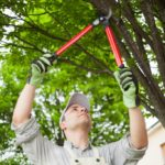 Is it Time to Trim Your Trees? 4 Ways to Find Out