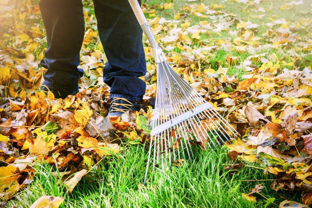 Gardener raking fall leaves in garden