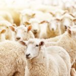 Starting your Own Shearing Business