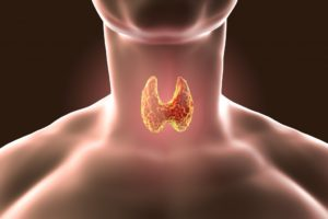 image of a person's thyroid