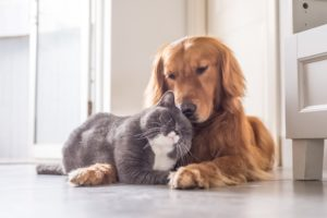 dog and a cat cuddling