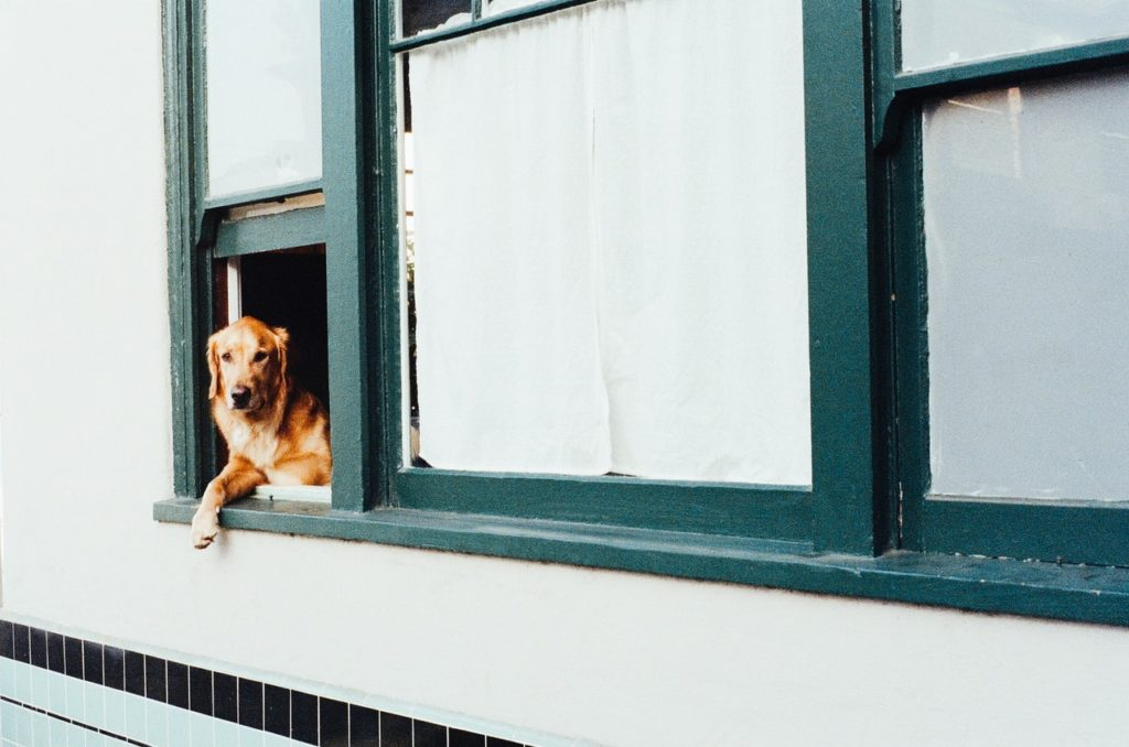 dog peeking out from a window