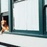 Returning to Work? The 4 Things That Worsen Your Dog's Separation Anxiety