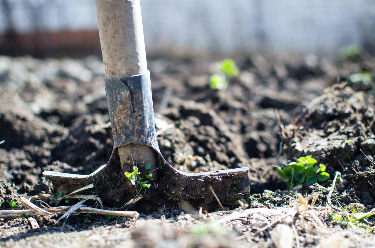 shoveling the ground
