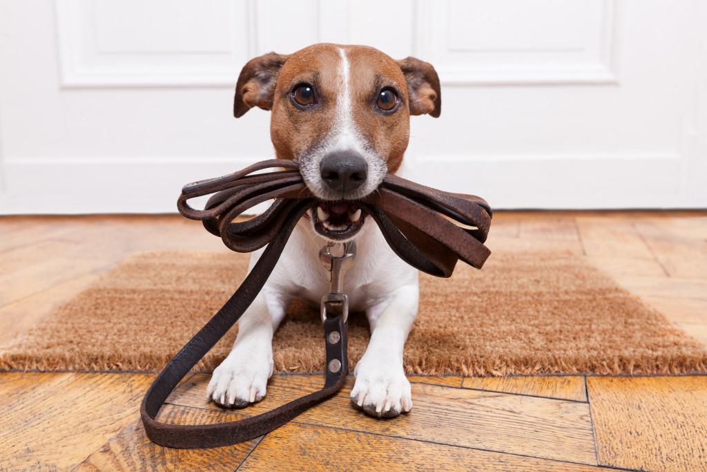 dog biting a leash