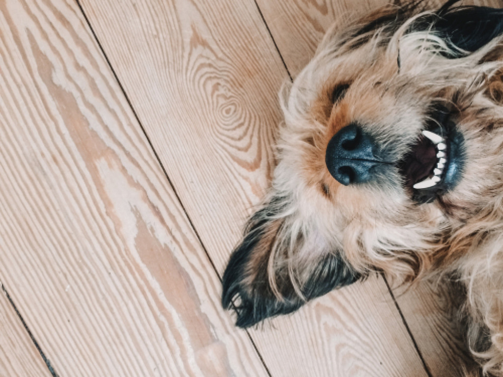 Making Your Dog More Sociable and Active